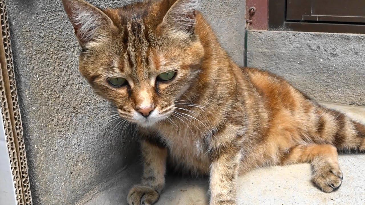野良猫をなつかせる方法教えて : 猫目新聞