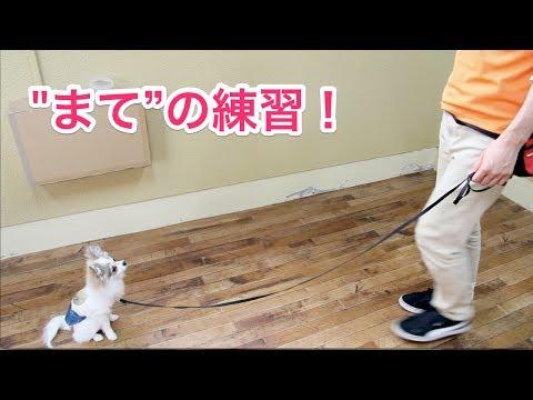 """""""まて""""の練習!〜犬のしつけは大阪のsmart-dog〜"""