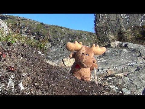 Der einsamste Elch von Norwegen