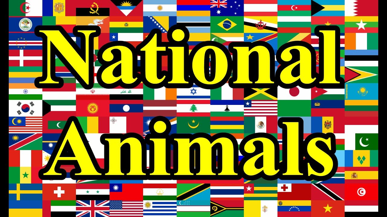 National Animals Of Countries Youtube