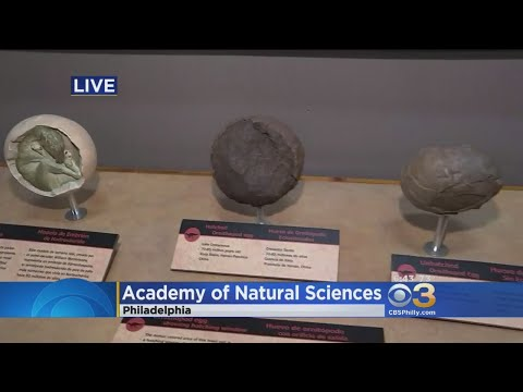 Academy Of Natural Sciences New Exhibit 'Tiny Titans' Opens Saturday