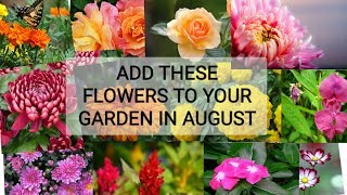 152# Floweing plants for your august garden.(IN ENGLISH)