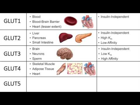 Glucose Transporters (GLUTs and SGLTs) - Biochemistry Lesson
