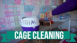 Cage Cleaning | TIMELAPSE | Hamster & Skinny Pigs