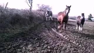 Première vidéo au Centre Équestre de la Roche