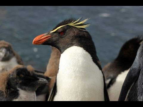 Falkland Islands - wildlife and heritage
