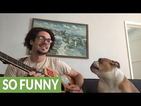 Winston The Singing Bulldog Rocks Out With Owner