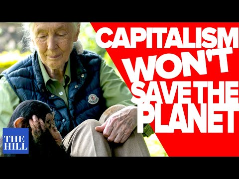 Jane Goodall: Capitalism Is Not Consistent With Saving The Planet