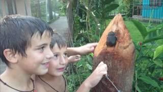 Отдых в Коста Рико в Центральной Америке