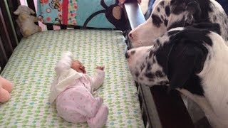Parents Introduce The Baby To Their Dogs… And Things Don't Go As Planned