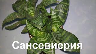 Мои новые цветы на подоконнике (НАЗВАНИЕ+ФОТО)  Комнатные растения