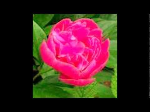 ozhuki ozhuki...... devotional song  by jobi & rincymol