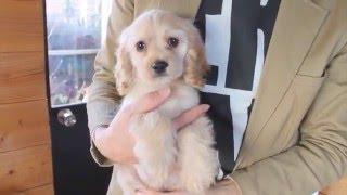 http://passerellewan.jp/puppies/?type=1.