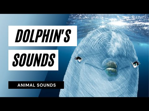 The Animal Sounds: Dolphin Sounds - Sounds Effect - Animation