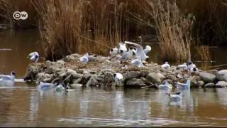 جهاز يحاكي طيران الطيور | يوروماكس