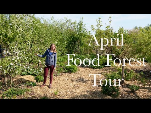 april-tour-of-our-1/4-acre-food-forest
