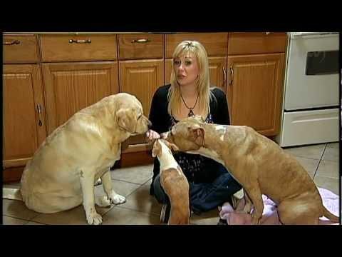 Top Shelf Feeds Pet Tales - Dog Food with Everett Dixon