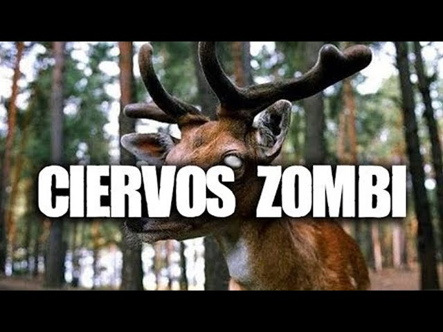 Ciervos Zombi