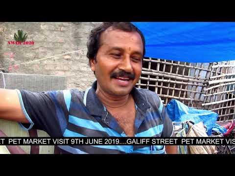 PRICE UPDATE OF BIRD AT GALIFF STREET PET MARKET KOLKATA INDIA | 9TH JUNE 2019 VISIT