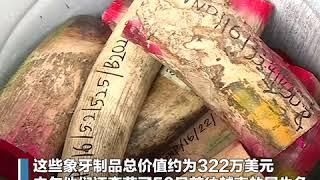 打击非法象牙贸易 马来西亚焚毁近4吨象牙制品
