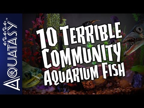 Aquatasy Countdown - 10 Terrible Community Aquarium Fish