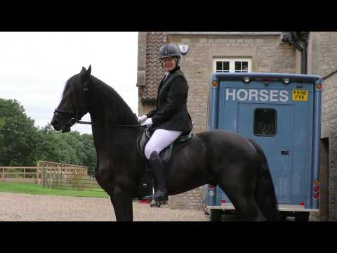 Friesian horse visits The Ryedale Show 25th July 2017.