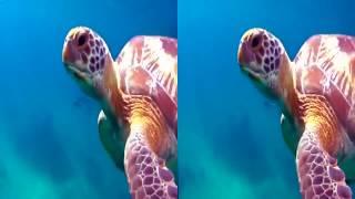 Видео для виртуальных очков океан Ocean World 3D
