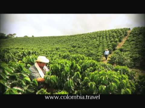 Cafe Triangle - Colombia - Official video