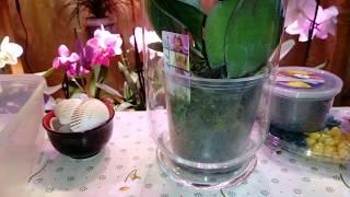 Новая Орхидея Препараты для аптечки орхиофила