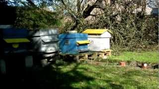 Apiculture: Ruches d'abeille Buckfast - Buckfast bee hives
