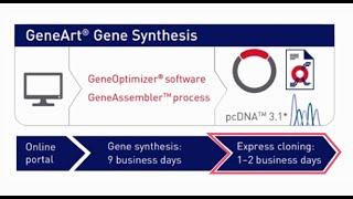 GeneArt Express Cloning Service