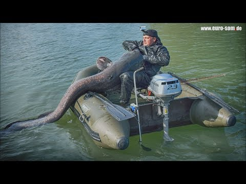 Fishing With A CLONK: Catching A Monster 2.2m Wels Catfish. 捕捞巨型鲶鱼 巨大なナマズの釣り