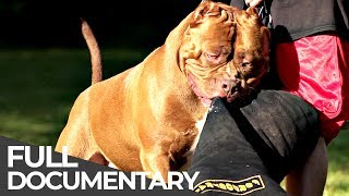 Giant Dog: The biggest pitbull in the world | Free Doc Bites | Free Documentary