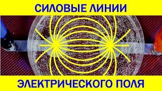 Электрическое поле - Физика в опытах и экспериментах(Опыт с касторовым маслом, в которое подмешана манная крупа, позволяет увидеть картину силовых линий электр..., 2015-11-19T09:12:15.000Z)