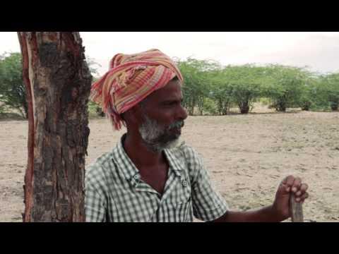 Around India - Dan Romer & Benh Zeitlin - The survivors