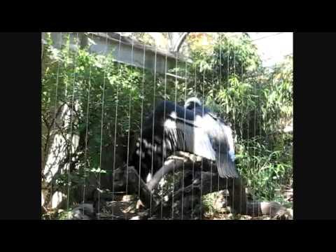 Condor Communication