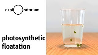 Light leaves leaves light | Photosynthetic Floatation - Science Snack Activity