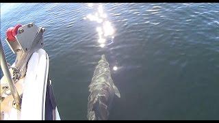 Court 650 - Dunmore - cruising on Port River / dus cu pluta