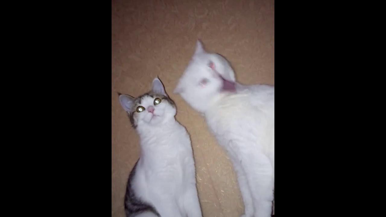Кот и кошка - YouTube