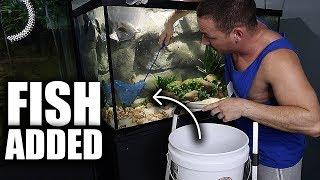 all-fish-added-to-the-aquarium
