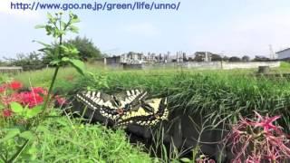 解説は海野和男のデジタル昆虫記http://www.goo.ne.jp/green/life/unno/...