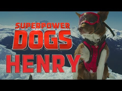 Filming Henry, the amazing Canadian avalanche rescue dog | Superpower Dogs