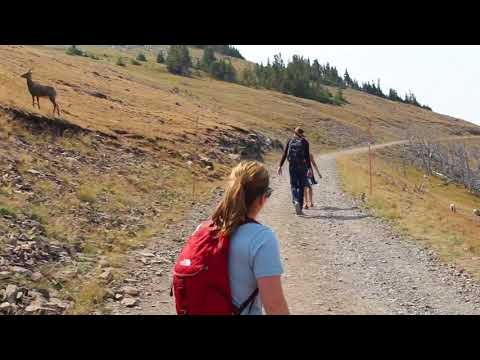 Yellowstone National Park - Mt. Washburn Trail Overview: Close Encounters with Big Horn Sheep!