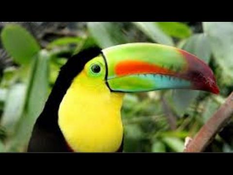 Wildlife protect in HONDURAS by JEAN HERCE