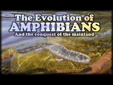 The Evolution Of Amphibians I : The Conquest Of The Mainland