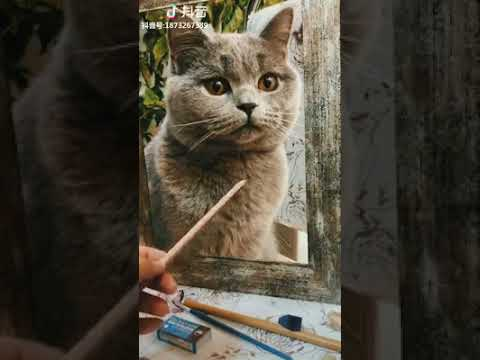 Cat Series: OMG, is this a picture cat or a real cat?