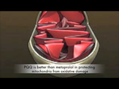 How PQQ (BioPQQ) Grows New Mitochondria and Slows Aging
