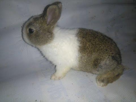 Ep.1 खरायो कुन प्रजातिको कसरी चिन्ने  ? How to know rabbit Breed ? Rabbit farming in Nepal