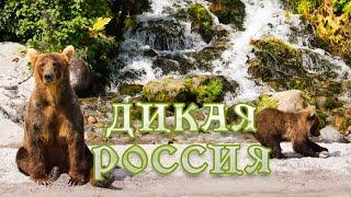 Дикая природа России. #Документальный фильм 4K