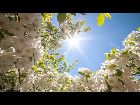 Mehdi (1st Day Of Spring) Relaxing Music,Instrumental,Background,Chillout,Meditation,Study,New Age